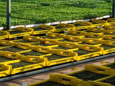 interior_1-green-plants-mimikos