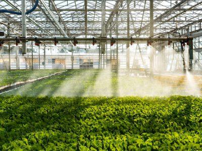 interior_4-green-plants-mimikos